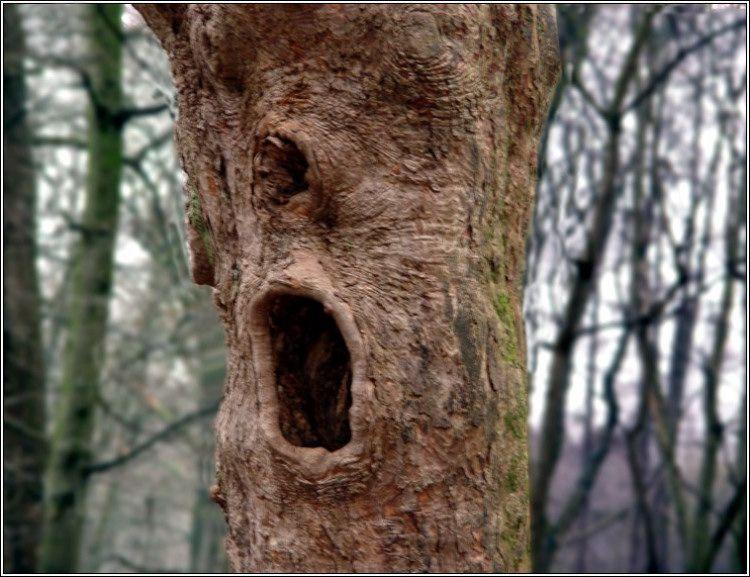 Картинки деревьев смешные