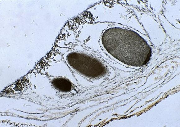 Днк под микроскопом фото